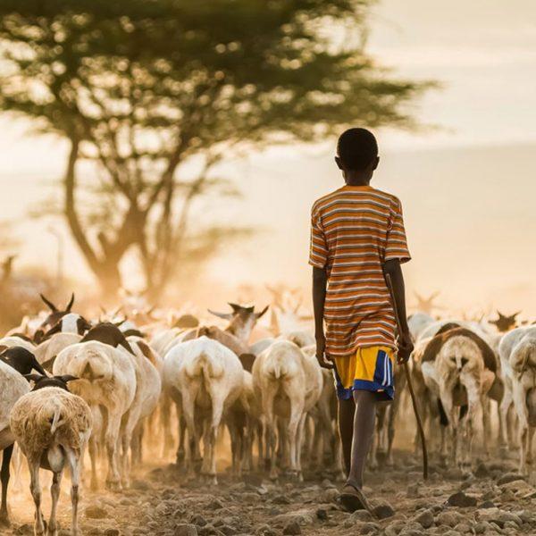 Farm4Trade-sheep-farming-a-first-introduction