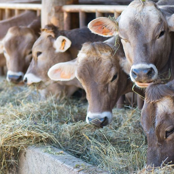 Farm4Trade-Balanced-diet-laboratory-analysis-animal-nutrition
