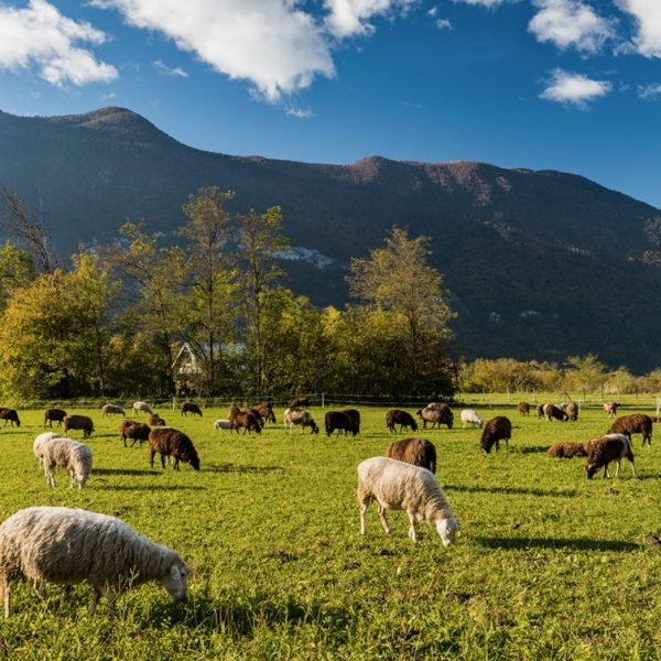 Farm4Trade-Livestock foraging behavior and diet selection