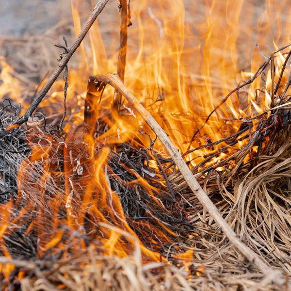 Farm4Trade - How controlled burning improves vegetation growth - Farm Management