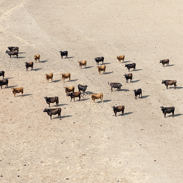 Technological ways of reducing livestock losses - Blog Farm4Trade