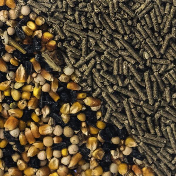 Understanding feed formulation softwares for better animal nutrition