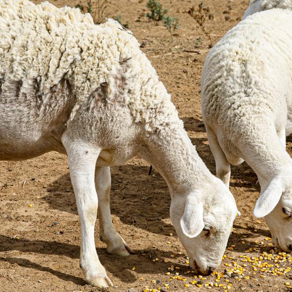 The best soil to farm livestock and produce alternative feed - Blog Farm4Trade