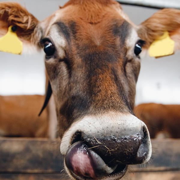 How to enhance palatability of animal feed - Blog Farm4Trade